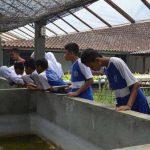 pelatihan_pertanian037