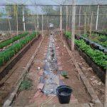 pelatihan_pertanian075