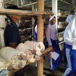 pelatihan_pertanian121